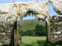 Fleeces drying on Redmire's garden gate